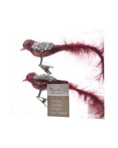 Vogeltjes op Clip Ossenbloed