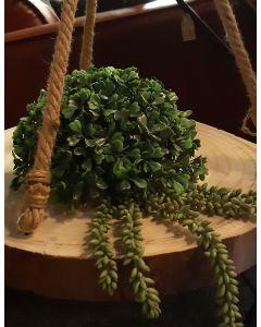 Plantenhanger van hout met jutte touw