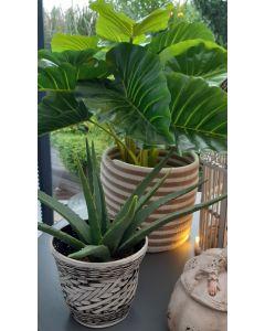 Aloe Vera kunstplant
