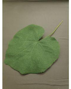 Lotus blad